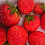Strawberries. Ripe freshly picked organic strawberries Royalty Free Stock Images
