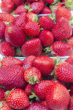 Strawberries. Ripe strawberries in vertical image Royalty Free Stock Photography