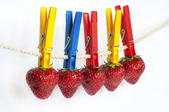 Strawberries on the rope Royalty Free Stock Photo