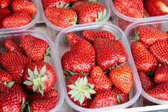 Strawberries for sale Royalty Free Stock Photo