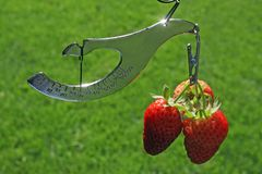 Strawberries And Scale Royalty Free Stock Photography