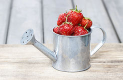 Strawberries in silver watering can Stock Photo