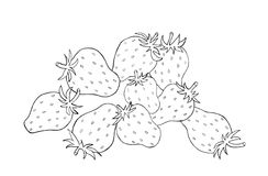Strawberries sketch Royalty Free Stock Photography