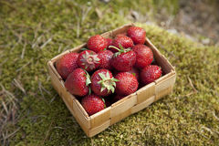 Strawberries in a small wooden basket Royalty Free Stock Photos