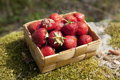 Strawberries in a small wooden basket Royalty Free Stock Photography