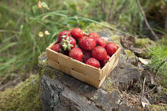 Strawberries in a small wooden basket Stock Image