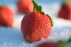 Strawberries in the snow Royalty Free Stock Images