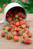 Strawberries spilled from a pot Royalty Free Stock Photos