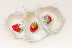 Strawberries splashing in milk royalty free stock photos
