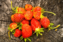 Strawberries on the stump. Stock Photography