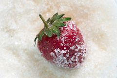 Strawberries in sugar Stock Photography
