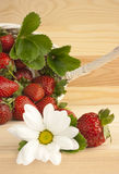 Strawberries, summer, flower, basket. Red ripe strawberries, wicker basket and white daisy flower on a kitchen table. Concept for summer, strawberry picking royalty free stock image