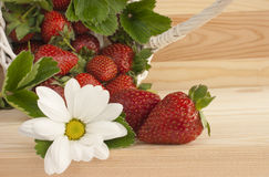 Strawberries, summer, flower, basket. Red ripe strawberries, wicker basket and white daisy flower on a kitchen table. Concept for summer, strawberry picking royalty free stock images