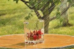 Strawberries and summer rain Stock Image