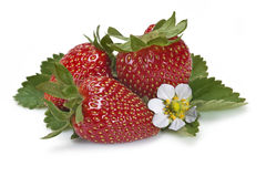 Strawberries and their flower. Royalty Free Stock Image