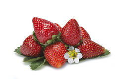 Strawberries and their leaves and flower. Stock Images