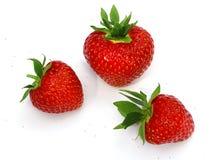 Strawberries. Three fresh strawberries on white background royalty free stock photos