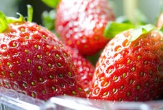 Strawberries in tray Royalty Free Stock Photos