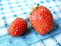 Strawberries. Two strawberries on a blue checkered cloth, macro Royalty Free Stock Photo