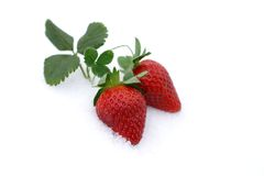 Strawberries, valentine's aphrodisiac. Fresh strawberries grow up in the snow, valentine's day royalty free stock photo