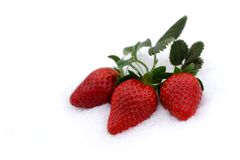 Strawberries, valentine's aphrodisiac. Fresh strawberries grow up in the snow, valentine's day stock images