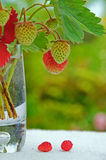 Strawberries in a vase Royalty Free Stock Photography