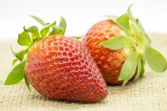 Strawberries vermelhos foto de stock royalty free