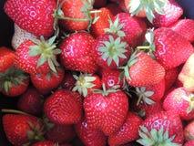 Strawberries vermelhos Imagens de Stock Royalty Free