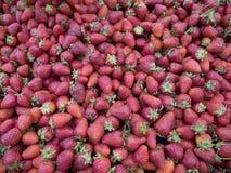 Strawberries vermelhos foto de stock royalty free