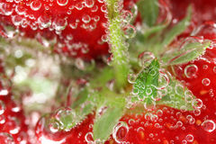 Strawberries in water macro. Fresh strawberries in bubbly water macro stock photo