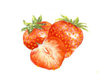 The strawberries watercolor  painting watercolor. The strawberries watercolor  on the white background Royalty Free Stock Photography
