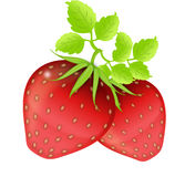 Strawberries on the white stock photo
