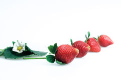 Strawberries on a white background Royalty Free Stock Photo