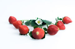 Strawberries on a white background Stock Images