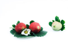 Strawberries on a white background Stock Image