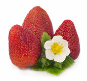 Strawberries on a white background. Stock Photo
