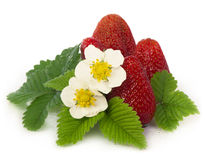 Strawberries on a white background. Royalty Free Stock Images