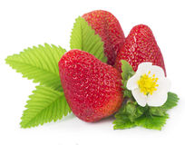 Strawberries on a white background. Stock Image