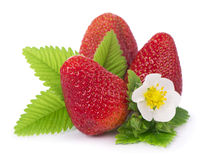 Strawberries on a white background. Royalty Free Stock Photo