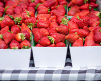 Strawberries. White cardboard boxes of fresh organic strawberries on a black and white checked table cloth, photographed at the Clement Street Farmer's Market in royalty free stock photos