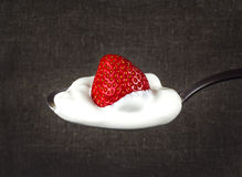 Strawberries in white cream on a silver spoon. Juicy strawberries at home cream on a silver spoon Stock Photography