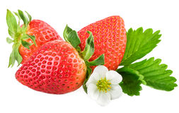 Strawberries on white. Fresh organic strawberry with leaf and flower Stock Images