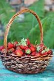 Strawberries  in wicker basket Royalty Free Stock Photo