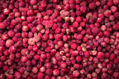 Strawberries. Wild red strawberries also called as Alpine strawberry stock images