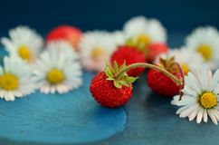 Strawberries, Wild Strawberries Royalty Free Stock Photography