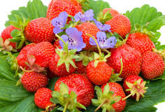 Strawberries With Flowers On Leaves Stock Images