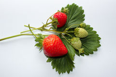 Strawberris de brin en automne Photo stock