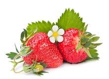 Strawberris fruit Royalty Free Stock Images