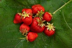 Strawberrries on Burdock Leaf Stock Photo