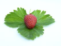 strawberry 01 Royalty Free Stock Images